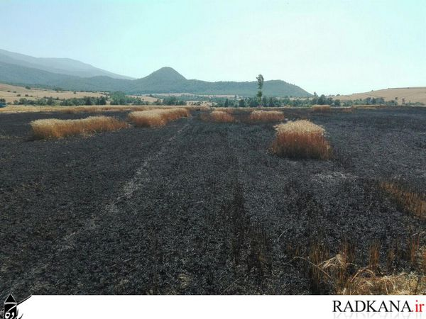 گندم زارهای روستای نامن طعمه حریق شد+تصاویر