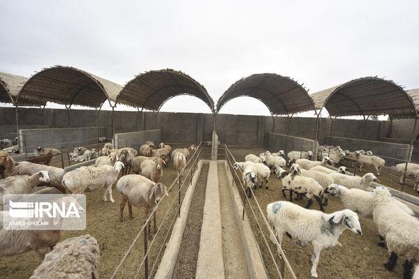 پنج هزار میلیارد ریال وام اشتغال روستایی در گلستان پرداخت شد