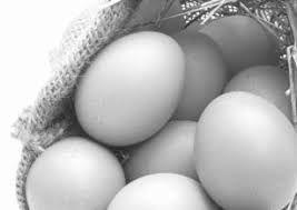 ما عزّت رو به تخم مرغ باز گرداندیم
