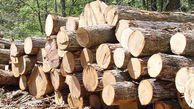 ۷۳۰ فقره پرونده به اتهام قطع درختان در گلستان تشکیل شد