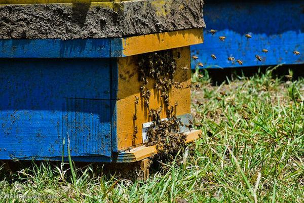 برندسازی راه پیشگیری از سودجویی در بازار عسل است