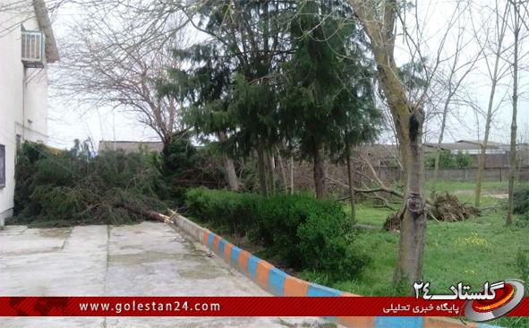 درختان کردکوی 1