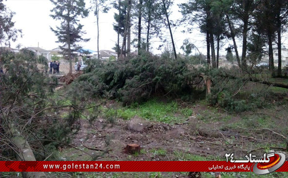 درختان کردکوی10