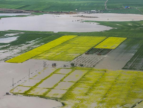 سیل و طوفان بیش از 13 هزار هکتار از زمین های کلزا را خراب کرد