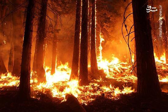 فیلم/ گرفتار شدن صدها نفر در میان شعلههای آتش!