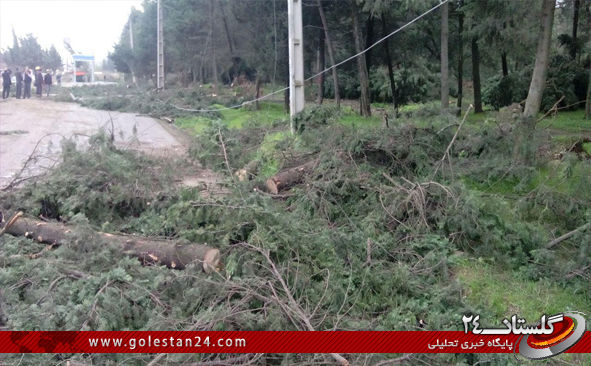 درختان کردکوی4