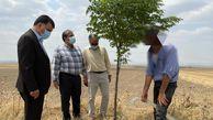 محکومان به جای زندان درختان را آبیاری می کنند