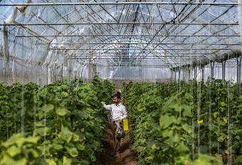 ۲۵۲ میلیارد تومان برای احداث گلخانه در گلستان تخصیص یافت