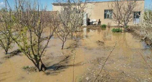 ۴۰ درصد از باغهای آزادشهر در سیل اخیر خسارت دید