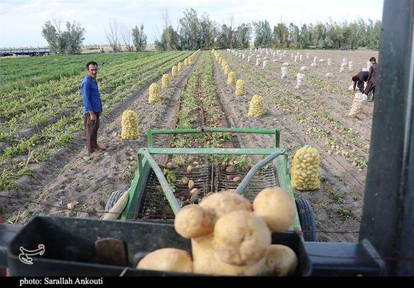 مشکلات سیبزمینیکاران گلستانی پیگیری شود