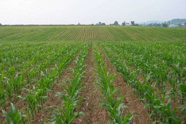 توصیههای هواشناسی کشاورزی به کشاورزان گلستانی