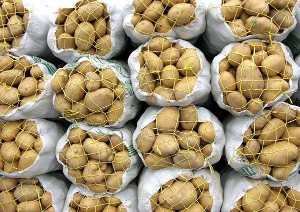 ۱۰ هزار تن سیب زمینی از سطح مزارع استان برداشت شد