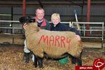 گوسفندانی که بله را از عروس گرفتند+تصاویر