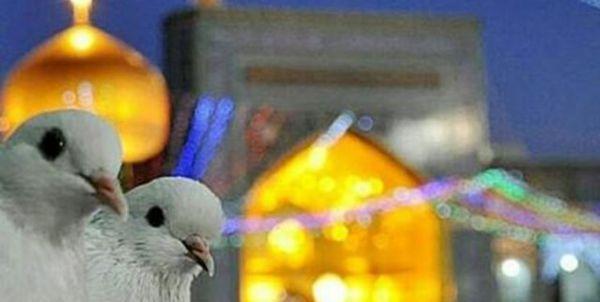 اولین دوره جشنواره ی کشوری کبوتر حرم