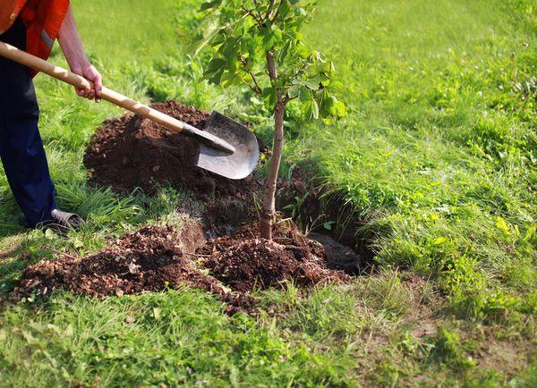 کاشت حدود ۵۰۰ اصله درخت در گرگان