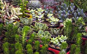 تولید ۸ میلیون گل و گیاه زینتی در گلستان