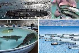 تاکید بر تسریع در روند راه اندازی پروژه های طرح پرورش ماهی در دریا