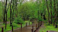خطر تبدیل پارکهای جنگلی به حیات خلوت معتادان