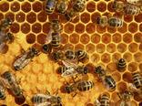 زنبورستانهای گلستان آمارگیری می شود