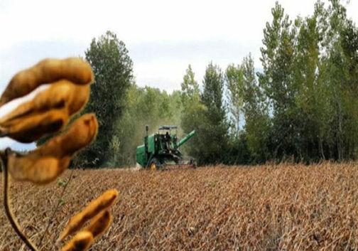 خریداری بیش از ۲۳ هزار تن دانههای روغنی سویا در گلستان