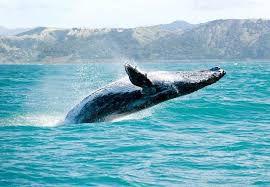 فیلم/ لاشه یک نهنگ در سواحل جزیره کیش