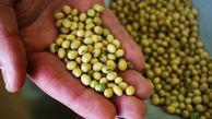 برداشت سویا از مزارع گلستان آغاز شد/ پیشبینی تولید ۲۴ هزار تن محصول