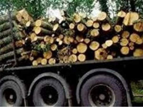 کشف بیش از 15 تن چوب جنگلی قاچاق در رامیان