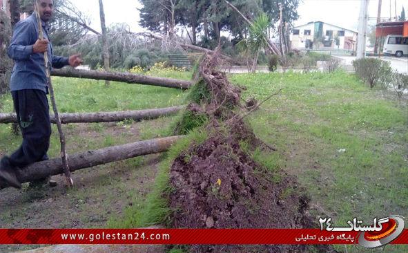 درختان کردکوی6