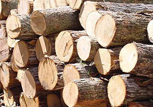 قاچاق چوب در کردکوی