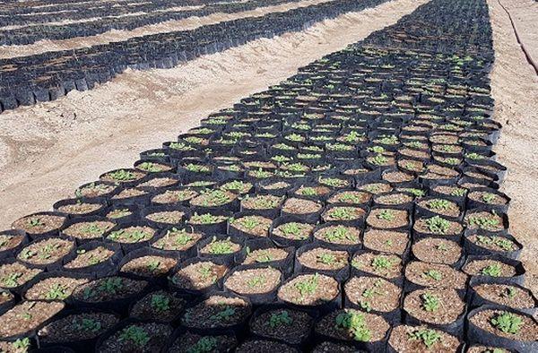 امسال یک میلیون نهال مرتعی در گلستان تولید شد