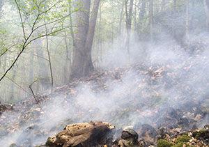 اطفا حریق در جنگل هزار پیچ گرگان