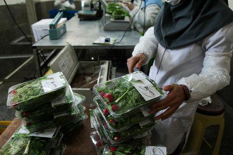 سبزی ارزان می شود/قیمت سبزیهای بستهبندی مورد تایید ما نیست