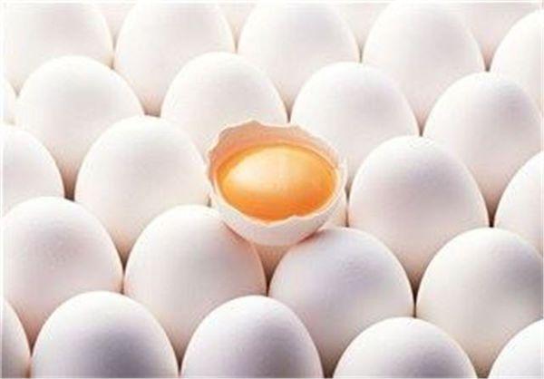 تولید ۱۱ هزار تن تخم مرغ در استان