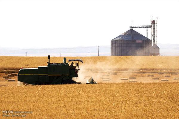 خیانت ۱۵ میلیارد تومانی در نان شب/ ۹ میلیون کیلوگرم گندم بیت المال ناپدید شد