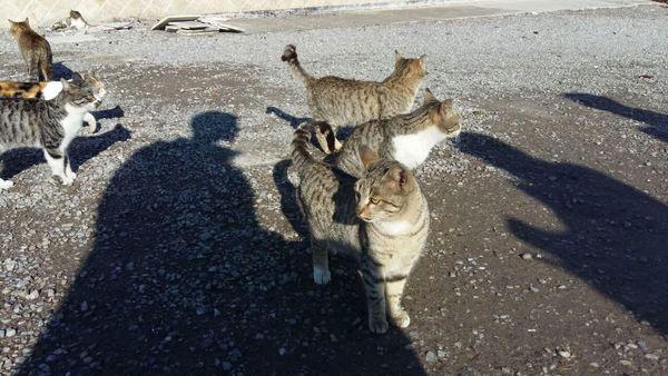 امکان صادرات گربه به چین فراهم است!/تصویر