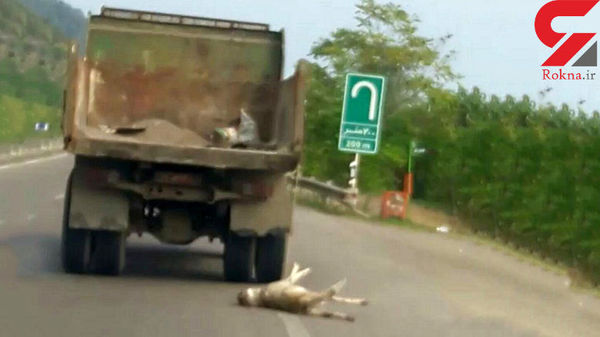 کشیدن سگ روی جاده با کامیون اداره راهداری + فیلم و عکس