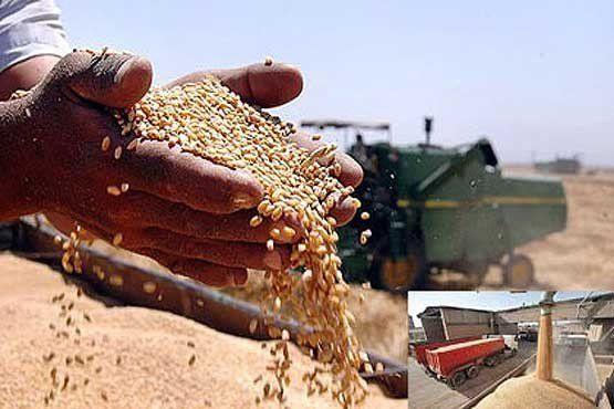 ۸۳۴ هزار تن گندم در گلستان خریداری شد