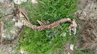 ماجرای کشف اسکلت دایناسور در گرگان چه بود؟
