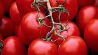 بدقولی کارخانه های استان در قیمت خرید گوجه از کشاورزان