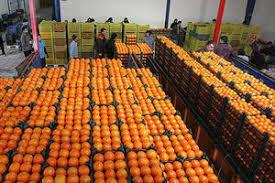 قیمت میوه شب عید طرح تنظیم بازاراعلام می شود
