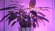 لامپ رشد گیاه ارزان  !