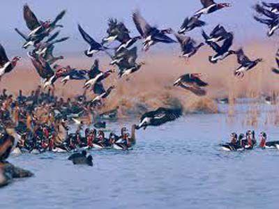 کشف اردک و مرغابی دریایی در استان