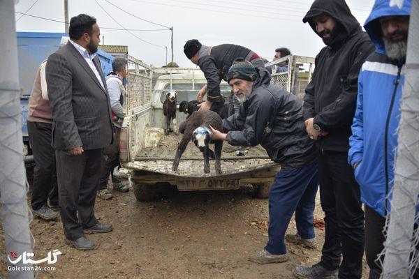 آیین اهدای تحویل دام سبک از سوی آستان قدس رضوی به سیل زدگان آق قلایی+گزارش تصویری