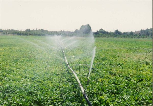 پرداخت بیش از 22 میلیارد تومان تسهیلات به طرحهای اولویتدار بخش کشاورزی در گلستان