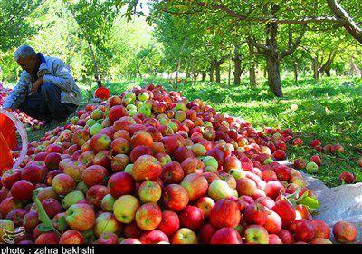 نرخ عمده فروشی انواع میوه و تره بار اعلام شد/ سیب ۸ هزار تومان + جدول