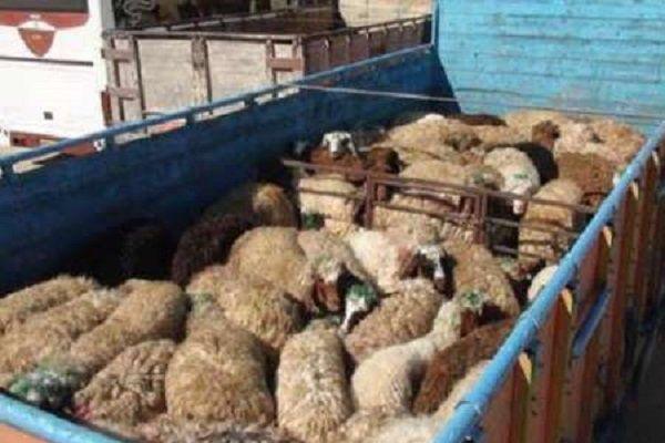 کشف ۴ میلیارد ریال دام قاچاق در رامیان