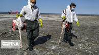 مرگ هزاران پرنده مهاجر، سمبل روزهای سخت خلیج گرگان