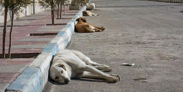 سگهای ولگرد در گنبدکاووس عقیمسازی میشوند