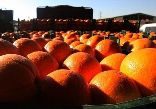 توزیع میوه شب عید با قیمت دولتی از فردا در گلستان