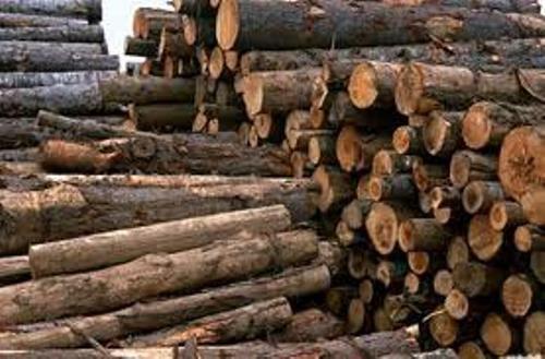 بیش از 50 تن چوب جاقاق در استان کشف شد